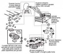Asma allergico acaro AMICOR